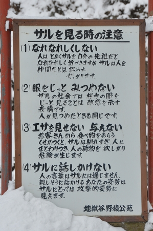 110305jigokudani10